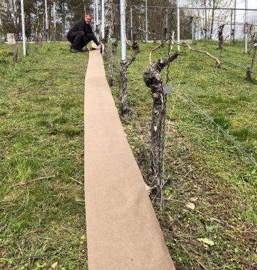 Nachhaltiger Weinbau